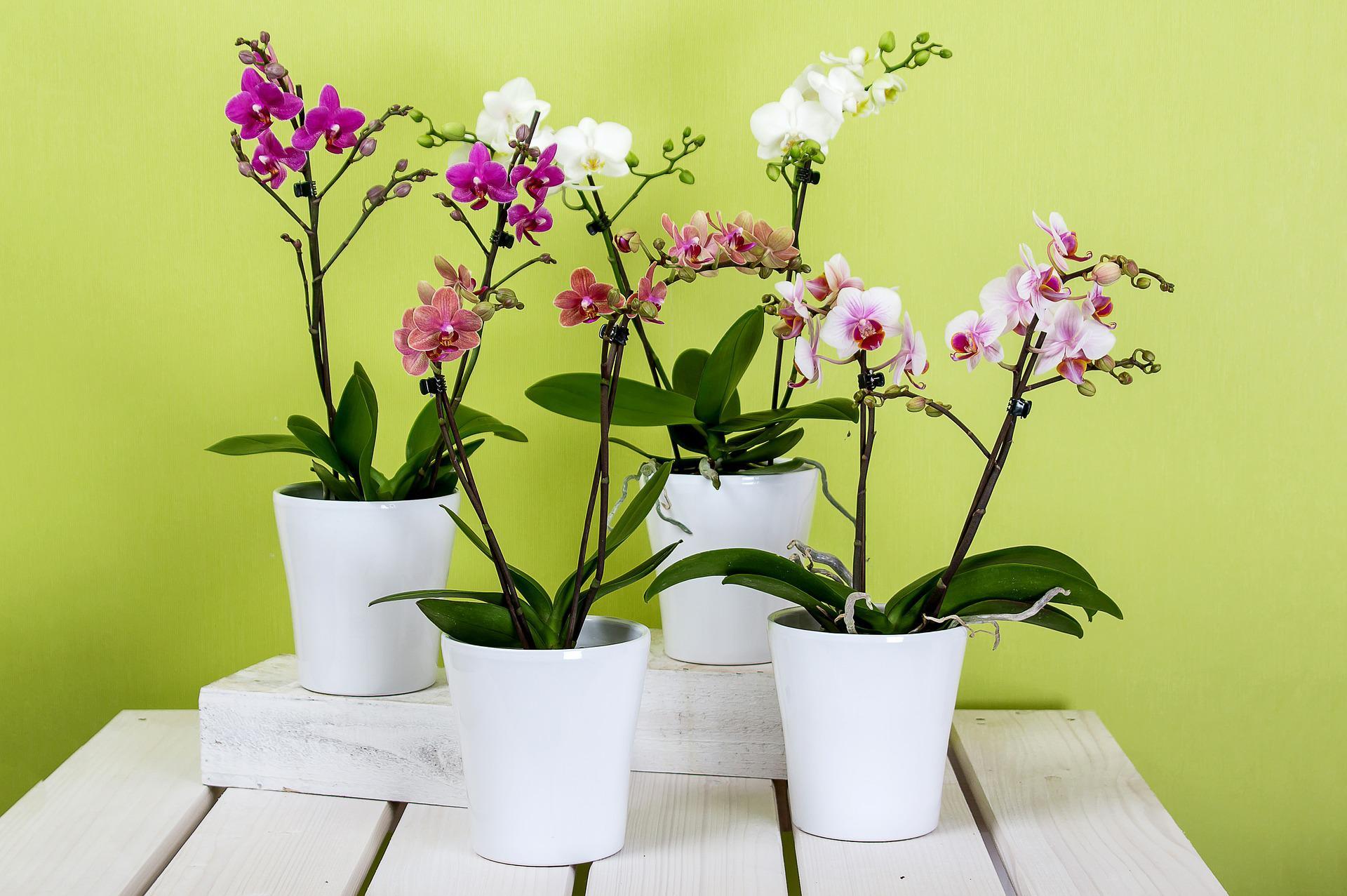 Gør livet nemmere med kunstige blomster