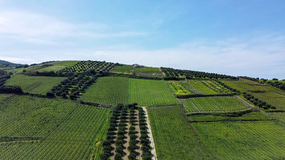 3 økonomiske tips til dig, der driver landbrug