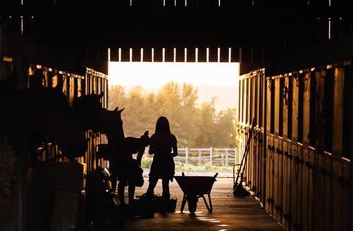 De gode staldtips: Dette skal din hest bruge
